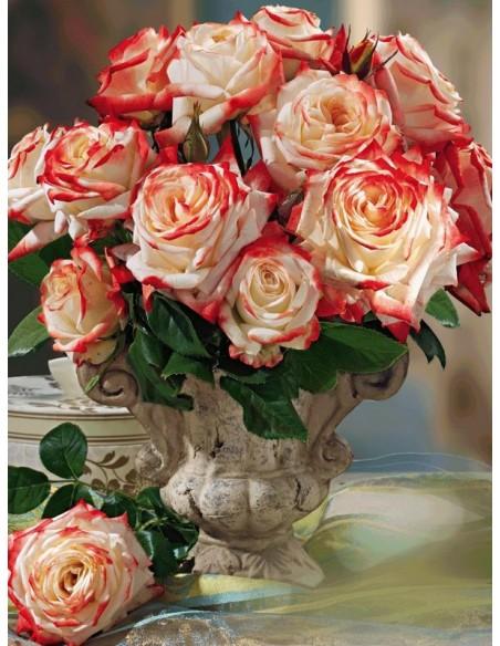 Imperatrice Farah róże wielkokwiatowe