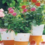 Uprawiamy róże w doniczkach