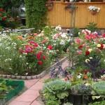 sadzenie róż na klombach