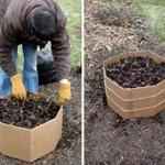 jak zabezpieczyć róże na zimę