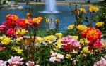 Co robić by mieć w ogrodzie piękne róże