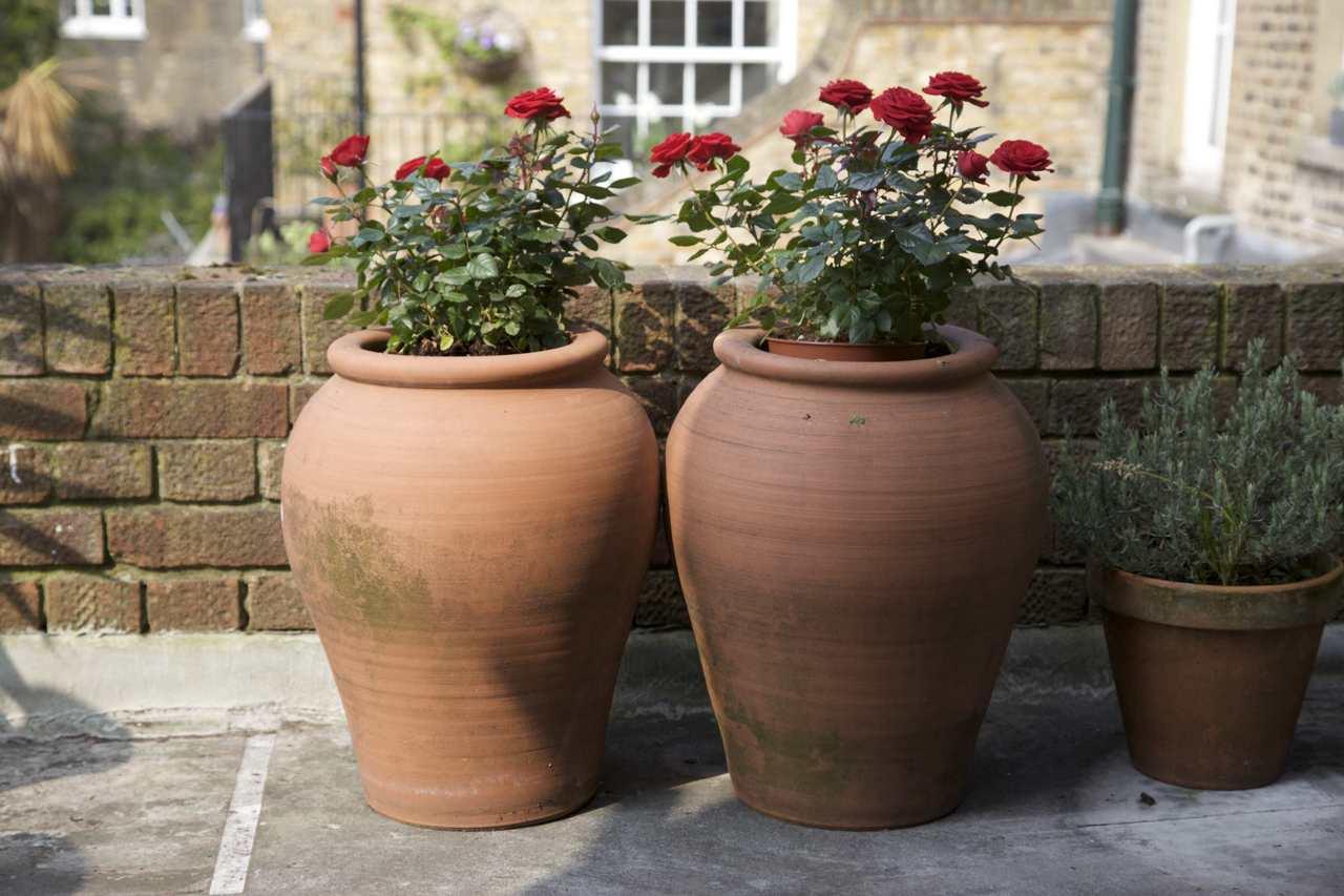 czerwone róże wielkokwiatowe w pojemnikach ceramicznych