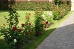 Jak hodować róże