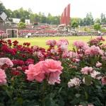 Międzynarodowe konkursy i wystawy róż