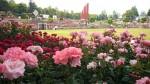 Międzynarodowe konkursy iwystawy róż
