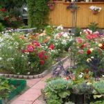 Jak przygotować glebę pod róże