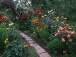 Windą donieba, czyli najlepsze róże pnące
