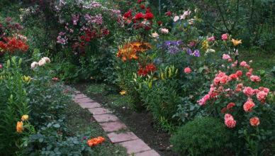 najlepsze odmiany róż pnących