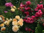 Sztuka ogrodowa, czyli o najczęstszych błędach w uprawie i pielęgnacji