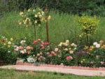 Róże pienne –  kwiatowe drzewka  nie tylko do ogrodu