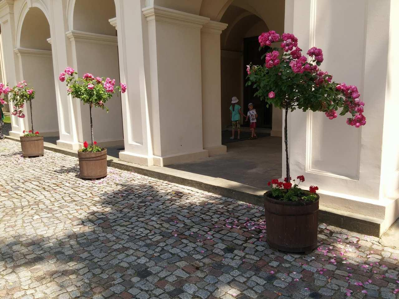 róże pienne kopułowe