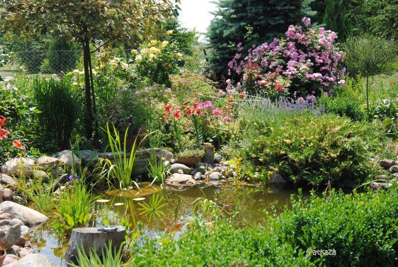 klimat jaki wprowadza woda do ogrodu różanego