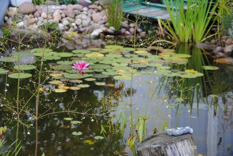 klimat wody w ogrodzie różanym
