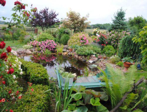 Królowe ogrodów wzwierciadle