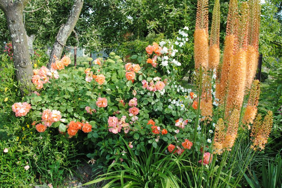 zestaw kolorów pomarańczowa westerland z pustynnikami