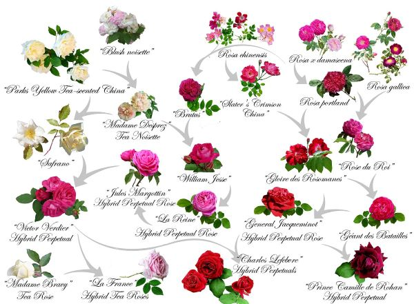 Spotkanie róż wschodu izachodu