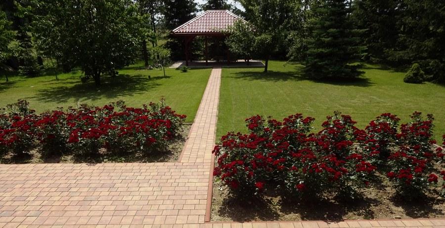 Lavaggio lavaglut bordowe róże okrywowe Pani Zofii