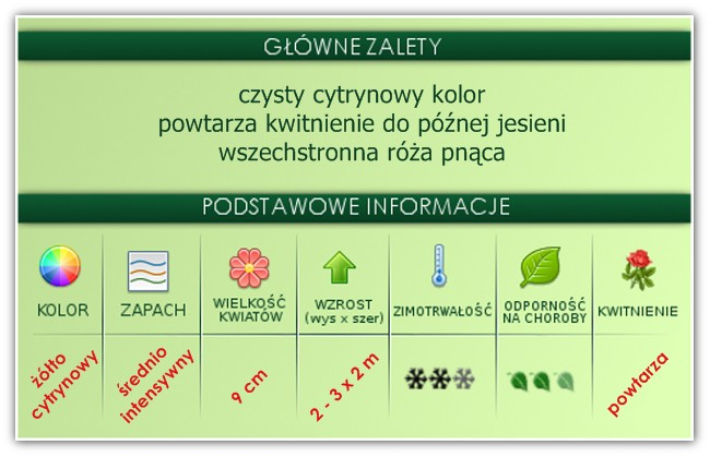 zalety róży Golden Showers