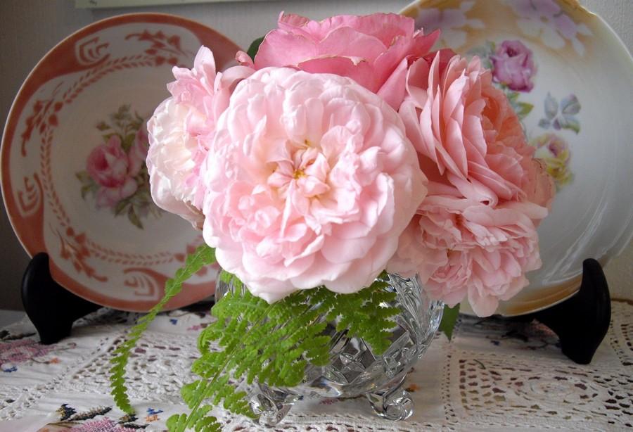 ausmak eglantyne różowe róże angielskie