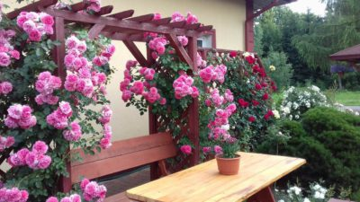 pergola z róży rosarium uetersen