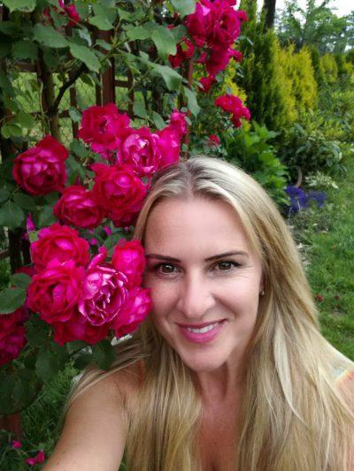 czerwona róża na pergoli
