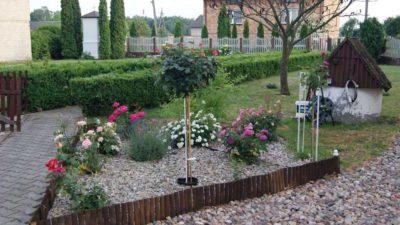 rodzaje róż ogrodowych