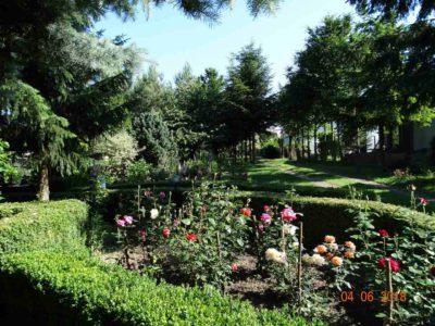 róże ogrodowe odmiany
