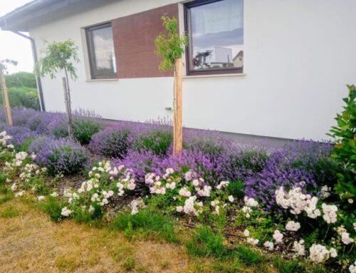 Agnieszka Bakowska – mój ogródek