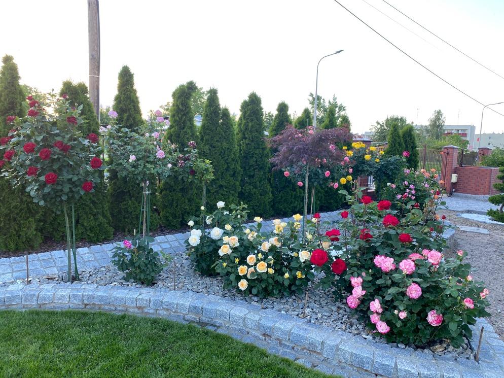 różąne ogrody
